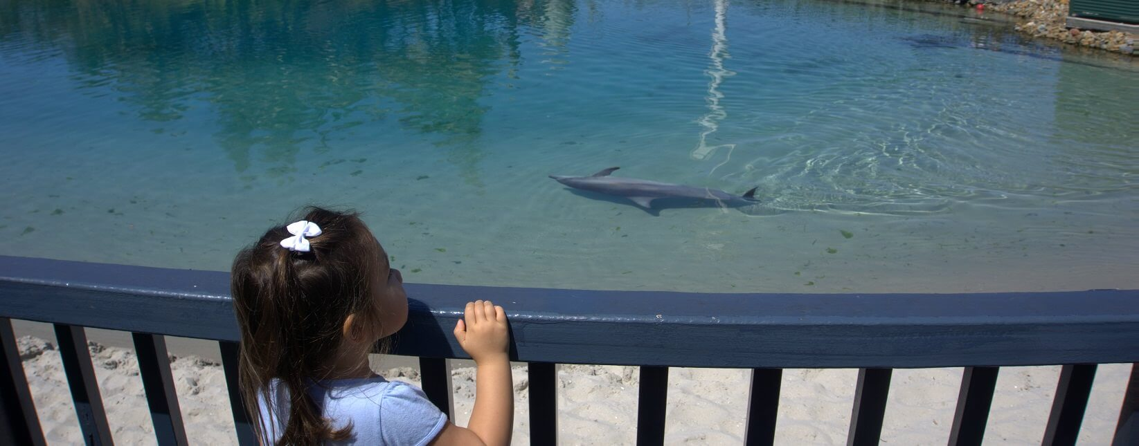 Kids know best - top 6 Sea World attractions
